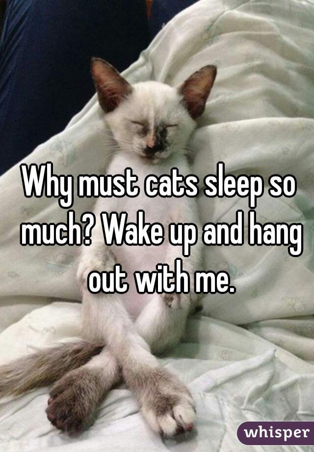 Why must cats sleep so much? Wake up and hang out with me.