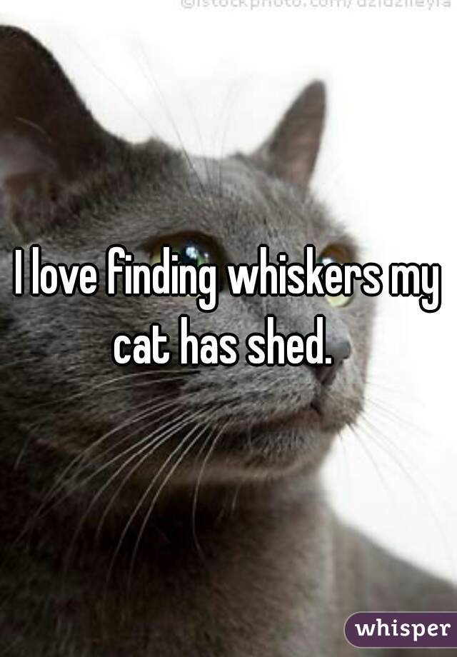 I love finding whiskers my cat has shed.