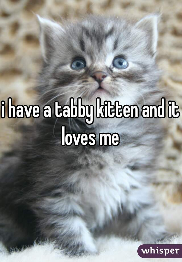i have a tabby kitten and it loves me