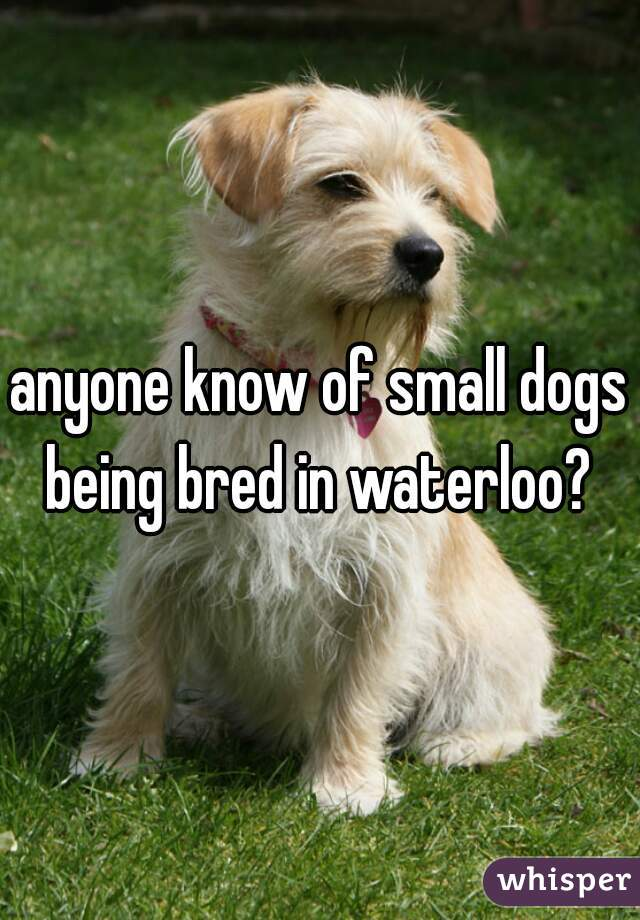 anyone know of small dogs being bred in waterloo?