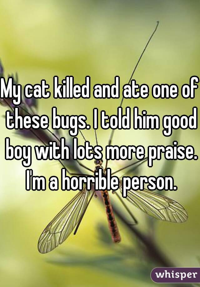 My cat killed and ate one of these bugs. I told him good boy with lots more praise. I'm a horrible person.