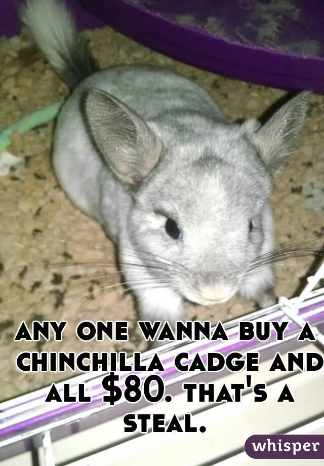 any one wanna buy a chinchilla cadge and all $80. that's a steal.