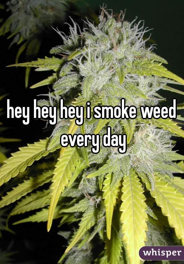 hey hey hey i smoke weed every day