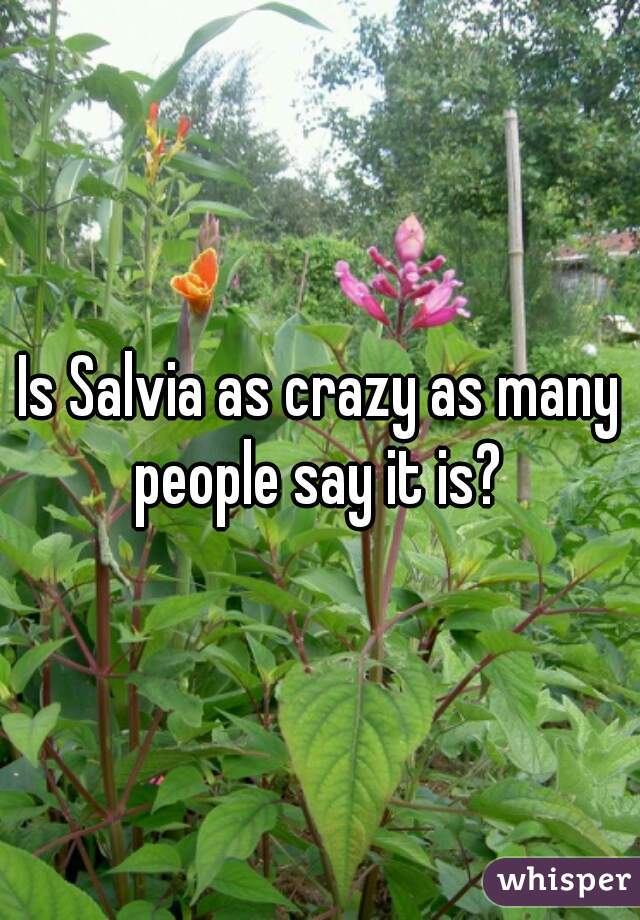 Is Salvia as crazy as many people say it is?