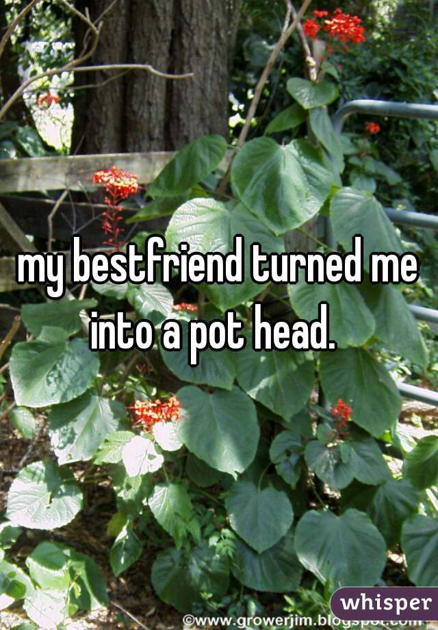 my bestfriend turned me into a pot head.