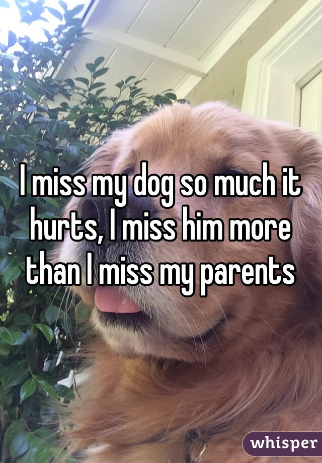 I miss my dog so much it hurts, I miss him more than I miss my parents