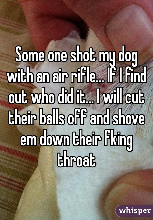 Some one shot my dog with an air rifle... If I find out who did it... I will cut their balls off and shove em down their fking throat