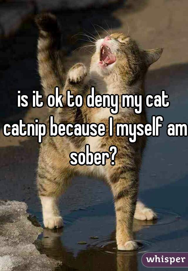 is it ok to deny my cat catnip because I myself am sober?