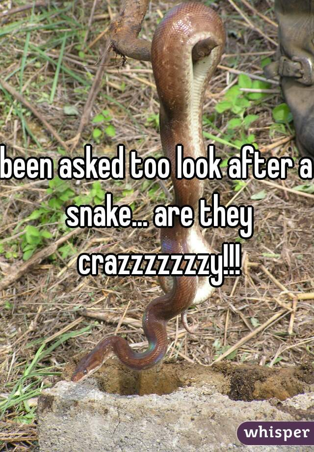 been asked too look after a snake... are they crazzzzzzzy!!!