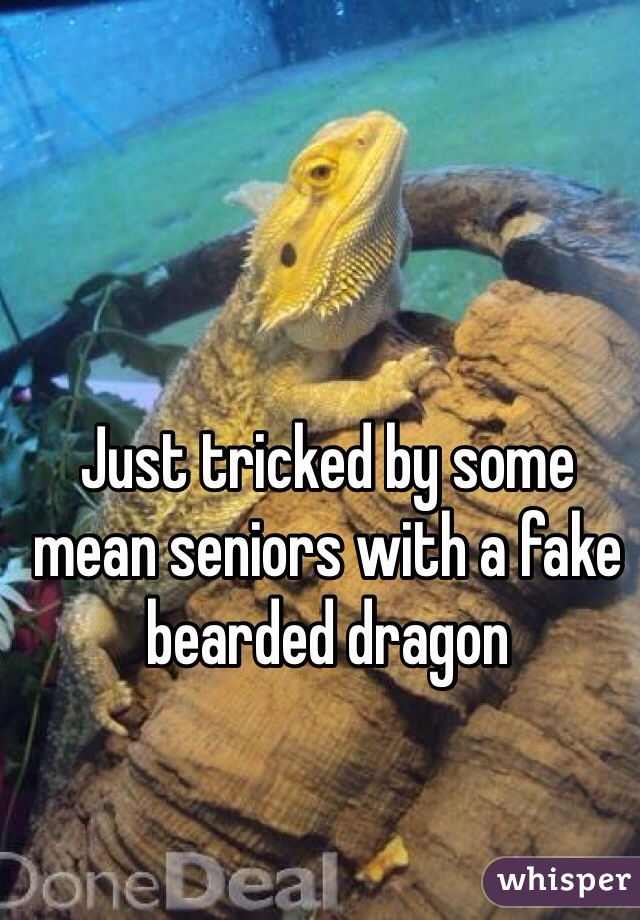 Just tricked by some mean seniors with a fake bearded dragon