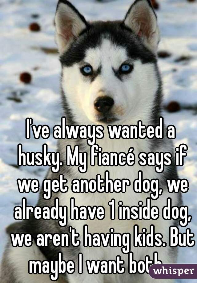 I've always wanted a husky. My fiancé says if we get another dog, we already have 1 inside dog, we aren't having kids. But maybe I want both...