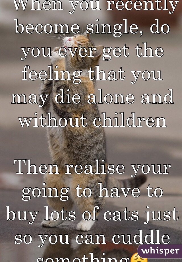 When you recently become single, do you ever get the feeling that you may die alone and without children   Then realise your going to have to buy lots of cats just so you can cuddle something😩
