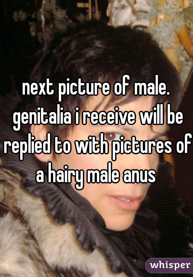next picture of male. genitalia i receive will be replied to with pictures of a hairy male anus