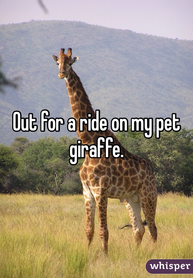 Out for a ride on my pet giraffe.
