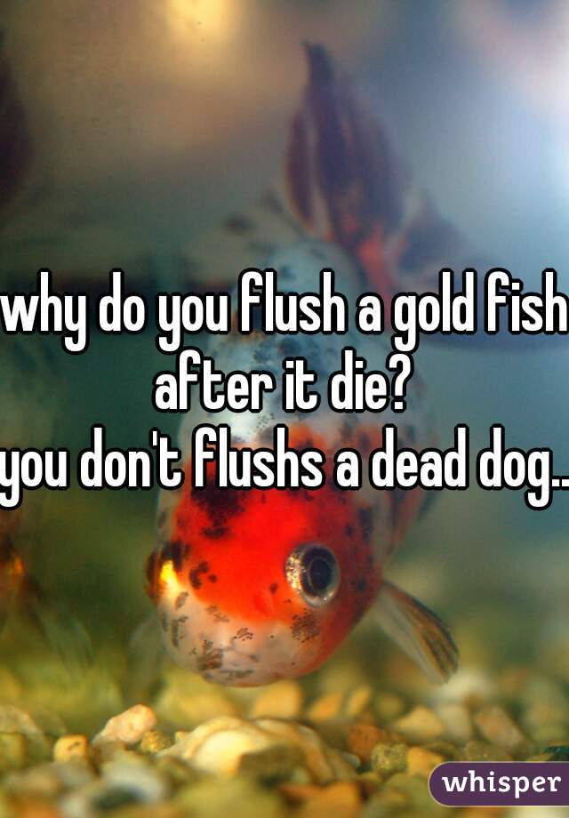 why do you flush a gold fish after it die?  you don't flushs a dead dog...