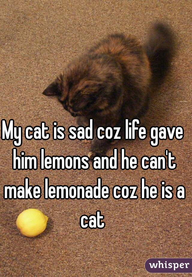 My cat is sad coz life gave him lemons and he can't make lemonade coz he is a cat