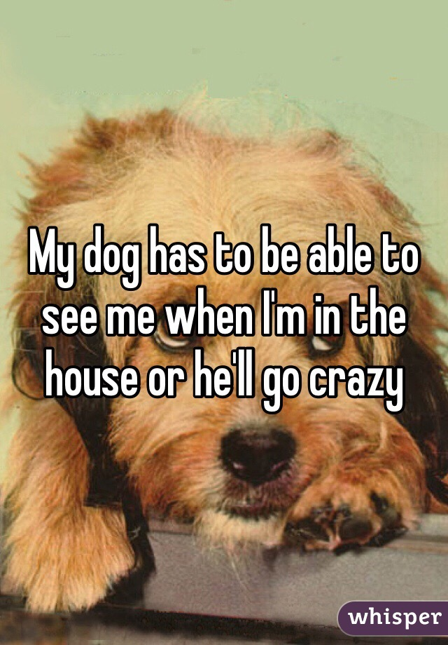 My dog has to be able to see me when I'm in the house or he'll go crazy
