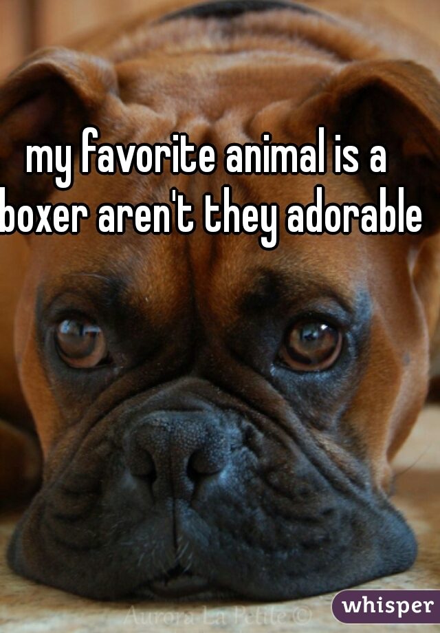 my favorite animal is a boxer aren't they adorable