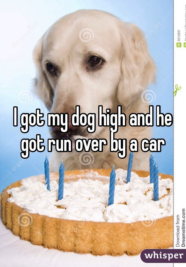 I got my dog high and he got run over by a car