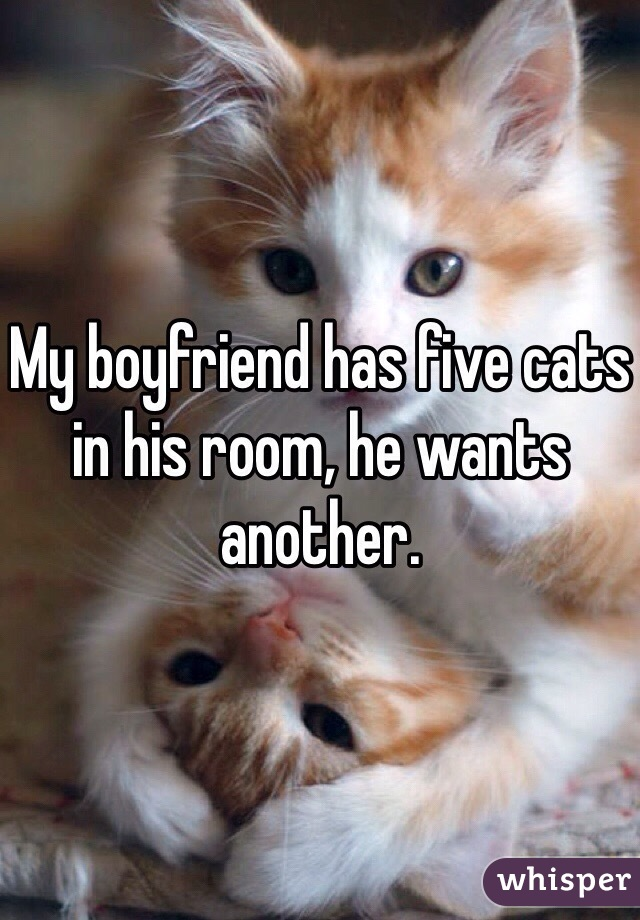 My boyfriend has five cats in his room, he wants another.