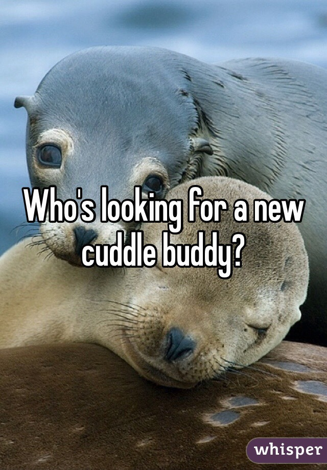 Who's looking for a new cuddle buddy?