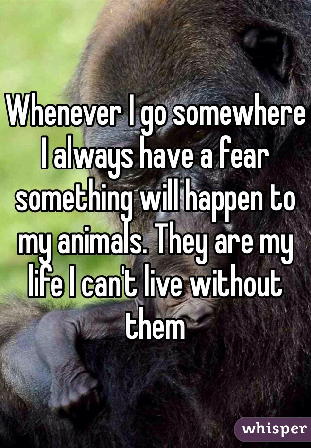Whenever I go somewhere I always have a fear something will happen to my animals. They are my life I can't live without them