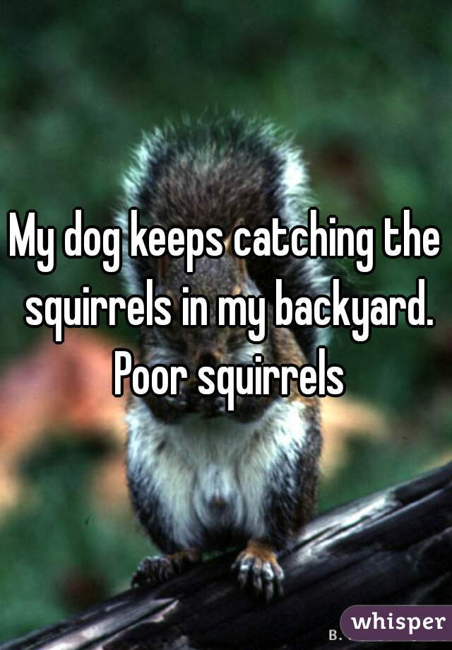 My dog keeps catching the squirrels in my backyard. Poor squirrels