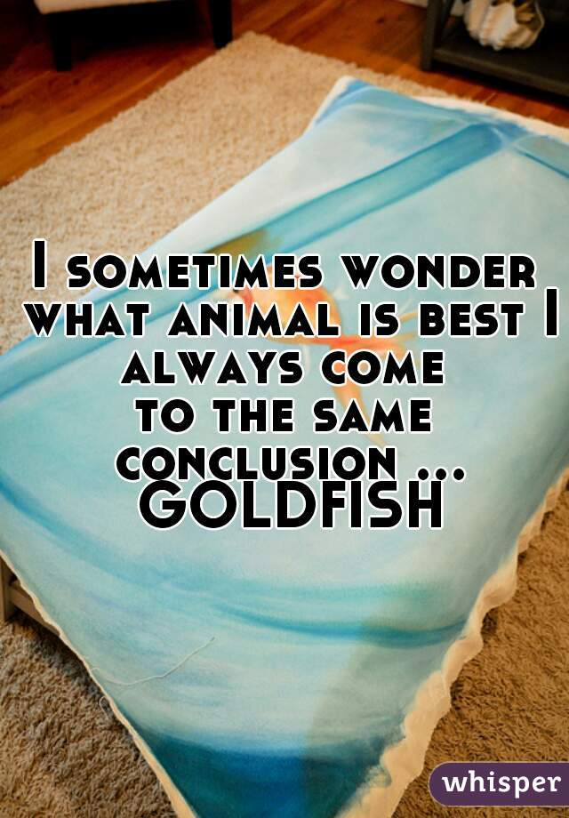 I sometimes wonder what animal is best I always come  to the same conclusion ... GOLDFISH