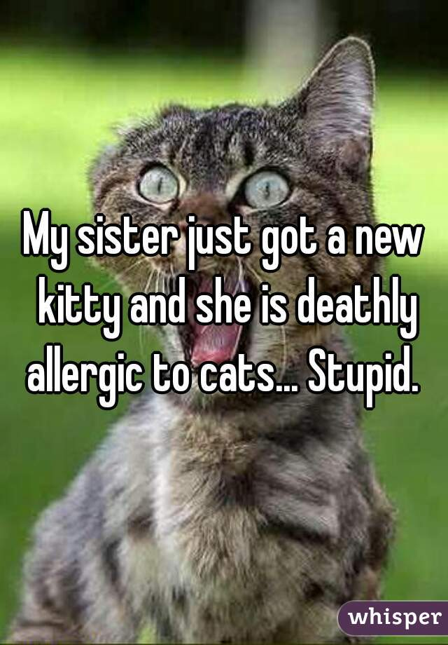 My sister just got a new kitty and she is deathly allergic to cats... Stupid.
