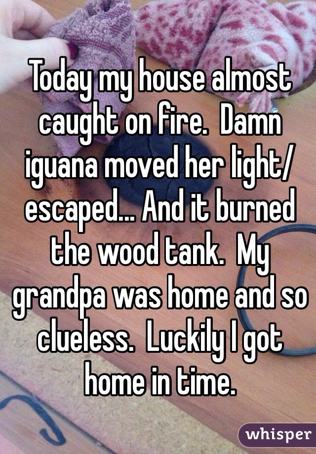 Today my house almost caught on fire.  Damn iguana moved her light/escaped... And it burned the wood tank.  My grandpa was home and so clueless.  Luckily I got home in time.