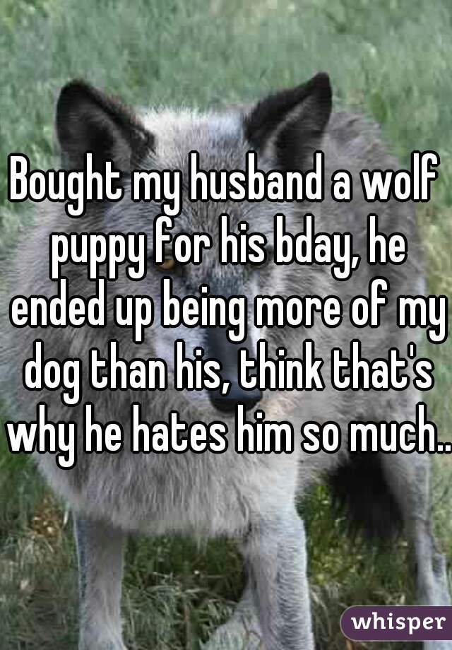 Bought my husband a wolf puppy for his bday, he ended up being more of my dog than his, think that's why he hates him so much..