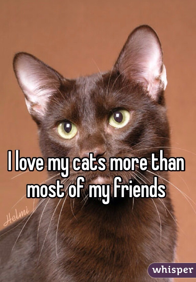 I love my cats more than most of my friends