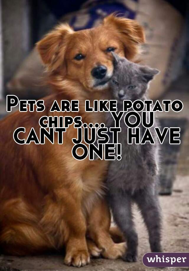 Pets are like potato chips.... YOU CANT JUST HAVE ONE!