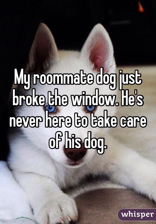 My roommate dog just broke the window. He's never here to take care of his dog.