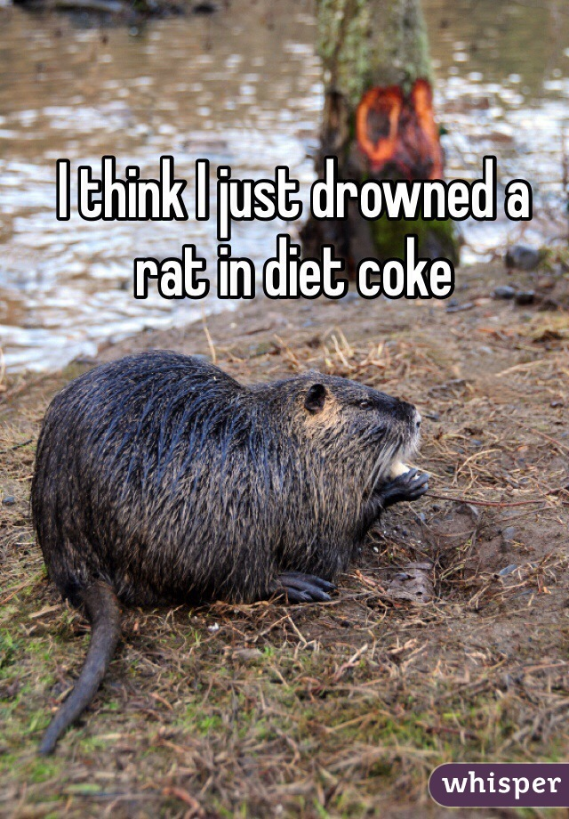 I think I just drowned a rat in diet coke