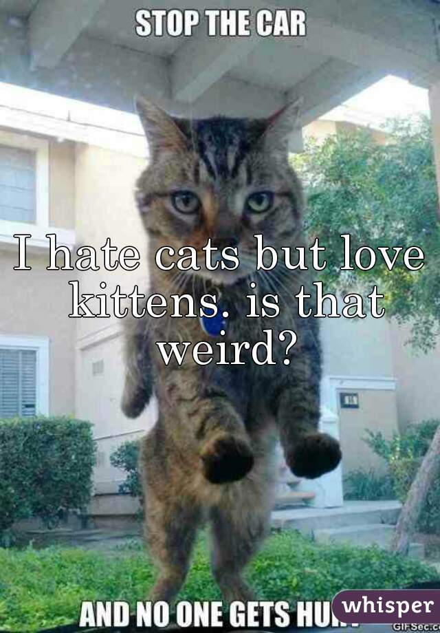 I hate cats but love kittens. is that weird?