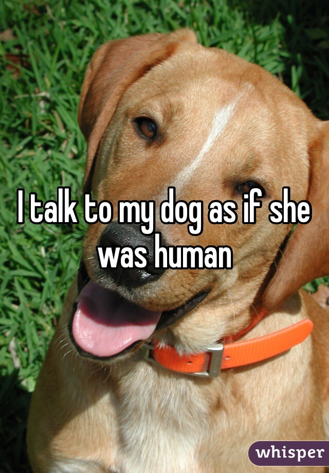 I talk to my dog as if she was human