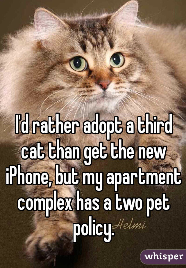 I'd rather adopt a third cat than get the new iPhone, but my apartment complex has a two pet policy.