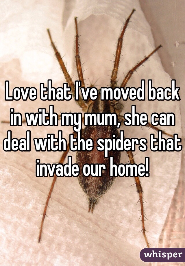 Love that I've moved back in with my mum, she can deal with the spiders that invade our home!