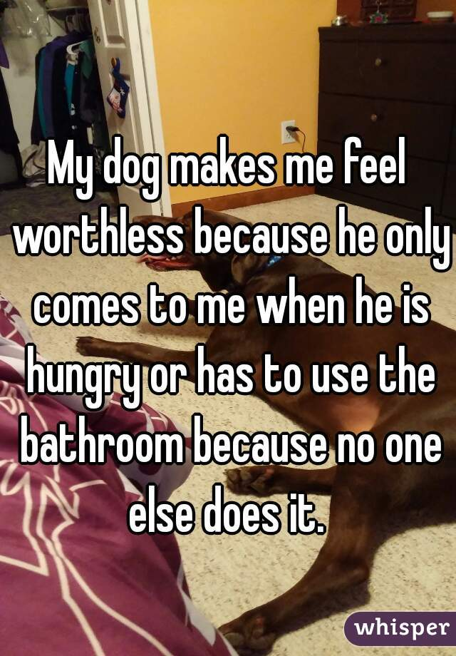 My dog makes me feel worthless because he only comes to me when he is hungry or has to use the bathroom because no one else does it.