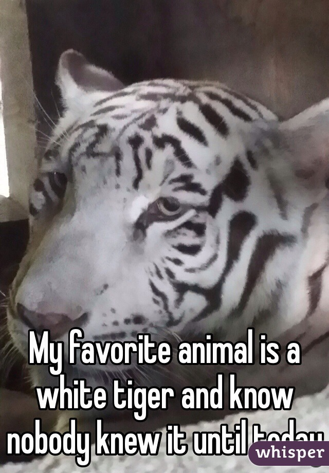 My favorite animal is a white tiger and know nobody knew it until today