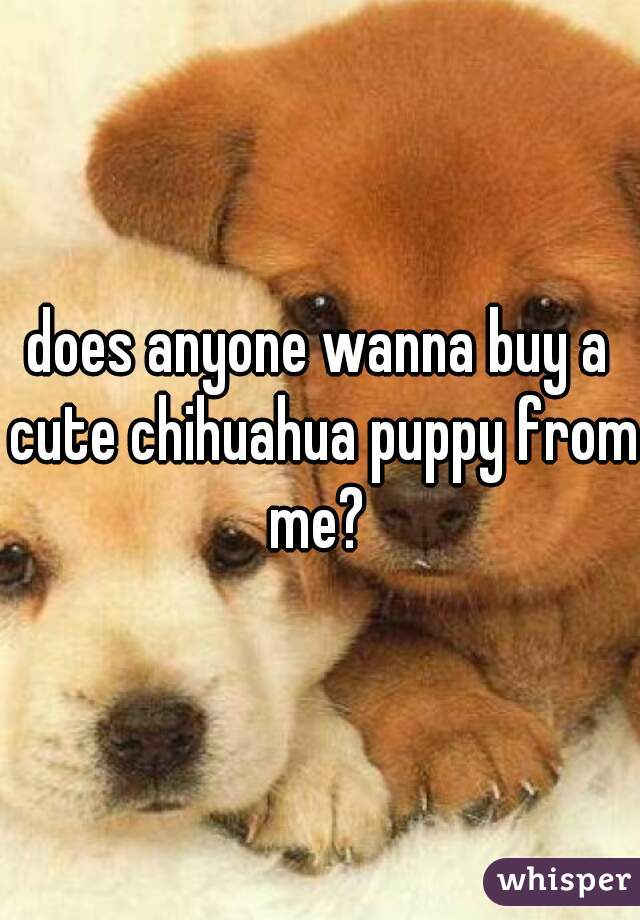 does anyone wanna buy a cute chihuahua puppy from me?