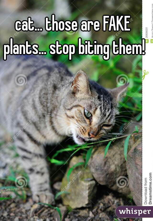 cat... those are FAKE plants... stop biting them!