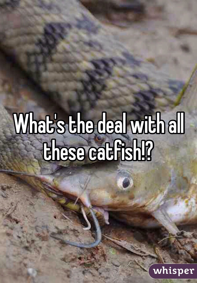 What's the deal with all these catfish!?