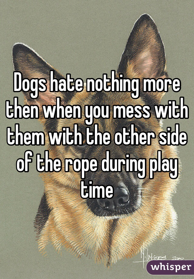 Dogs hate nothing more then when you mess with them with the other side of the rope during play time
