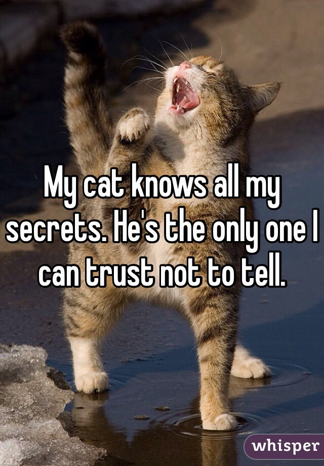 My cat knows all my secrets. He's the only one I can trust not to tell.