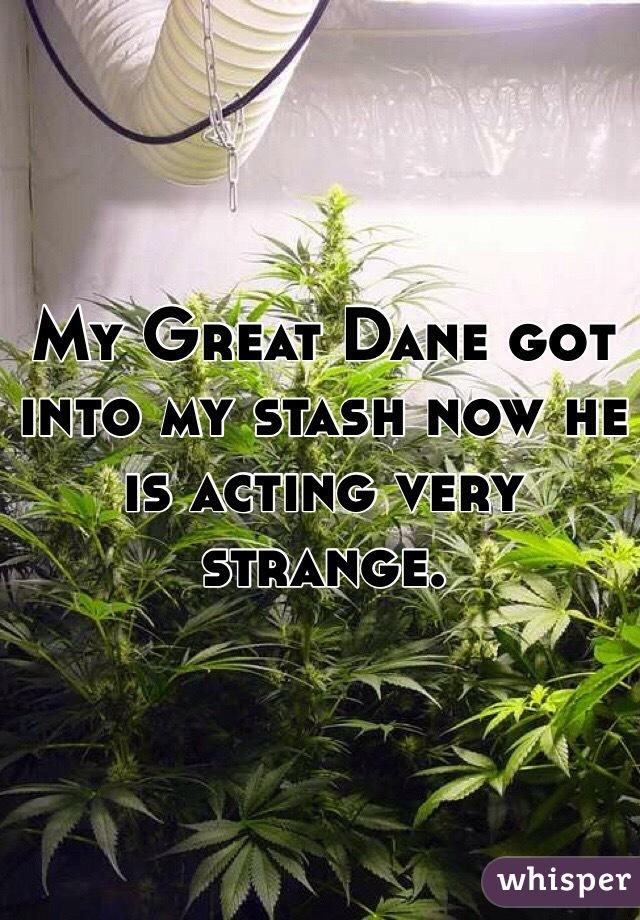 My Great Dane got into my stash now he is acting very strange.