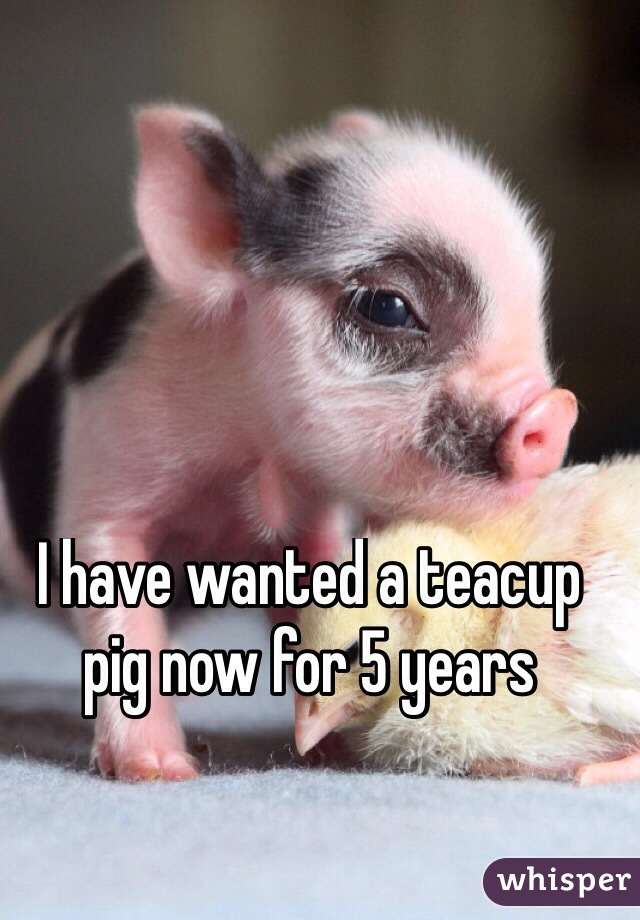 I have wanted a teacup pig now for 5 years