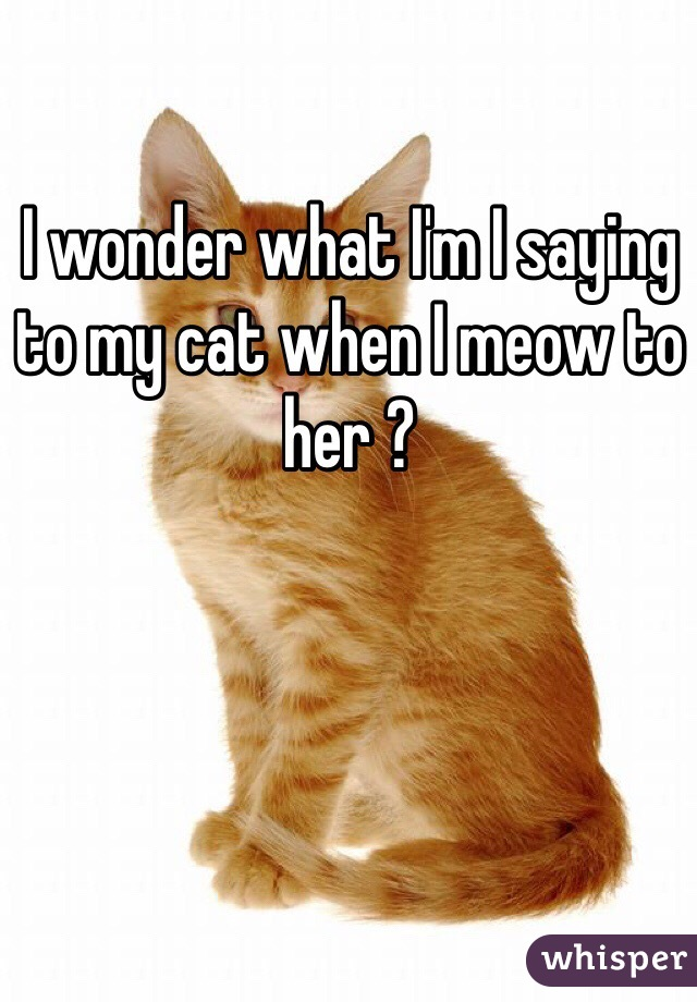 I wonder what I'm I saying to my cat when I meow to her ?