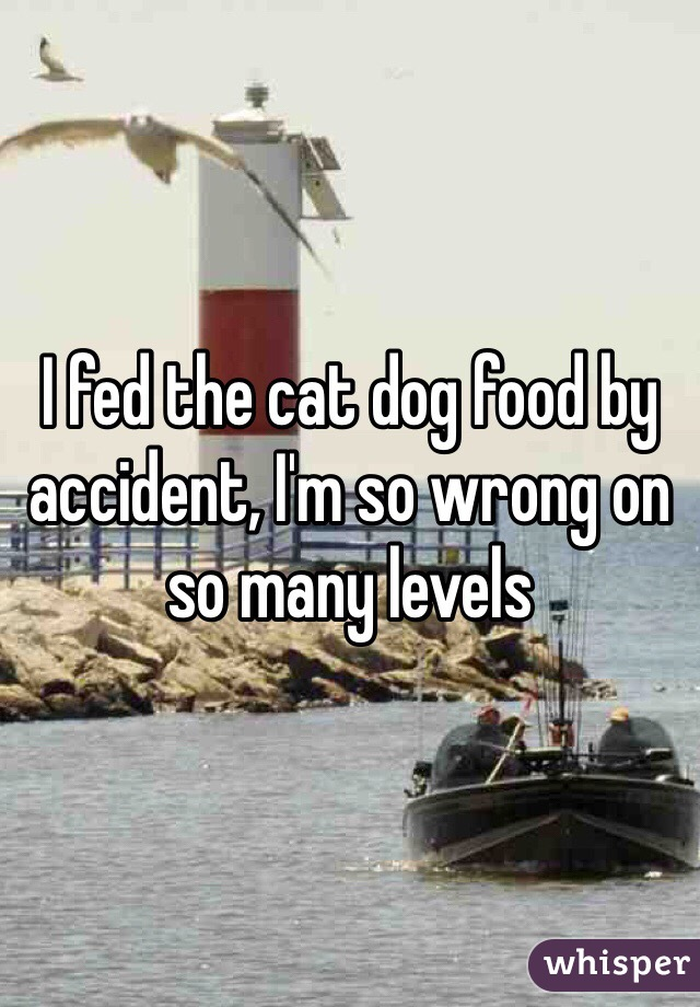 I fed the cat dog food by accident, I'm so wrong on so many levels